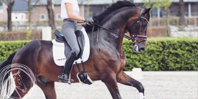 Hoe kies je het juiste bit voor een jong paard?